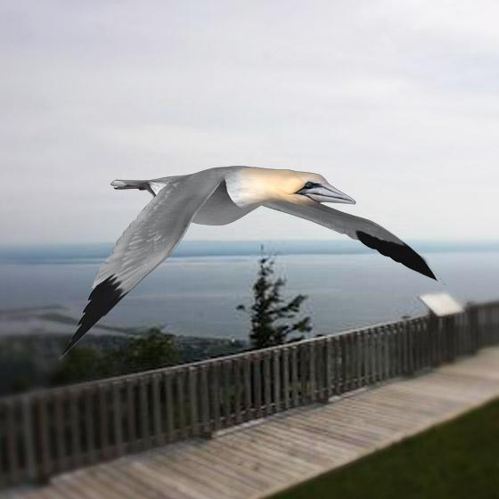 Virtual Aviary